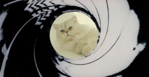 Good Spectre kitty...harmless!